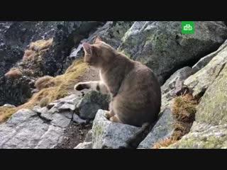 Альпинист на высоте 2,5 тысячи метров наткнулся на кота