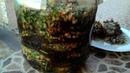 Баклажаны по армянски на зиму Магаданоси Eggplants in Armenian for the winter