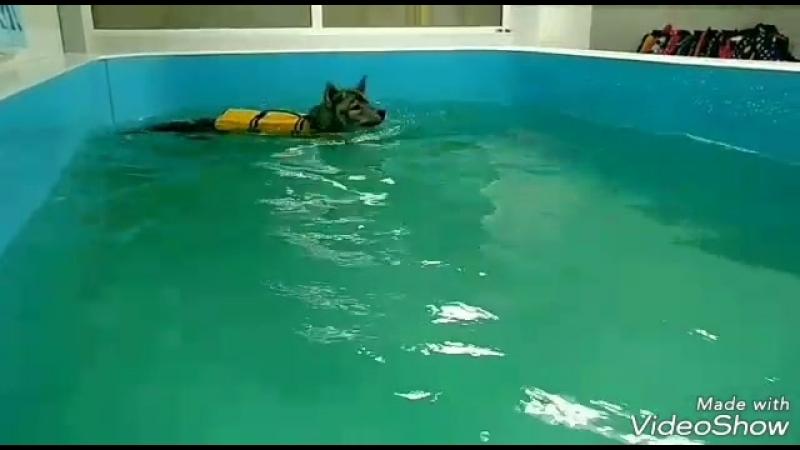 Хагрид плавает 3