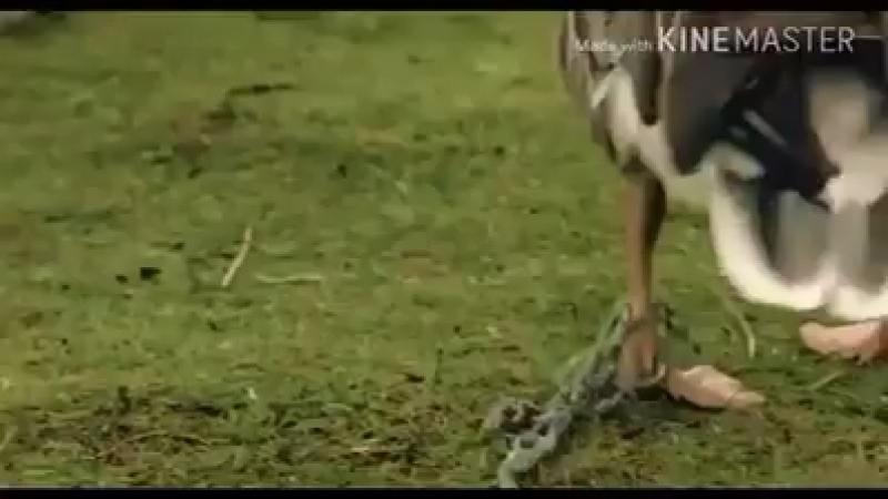 Каздар кайтты