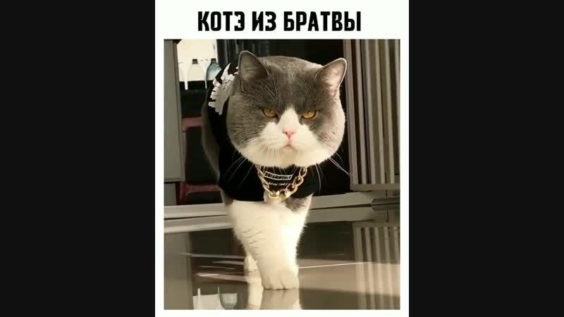 авторитетный кот