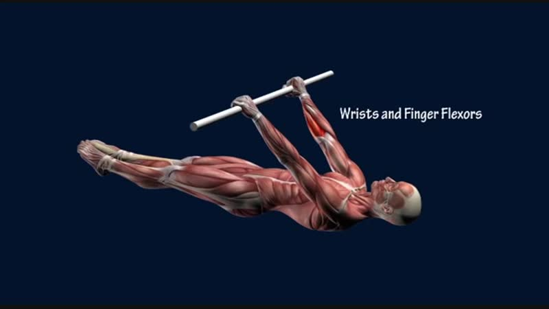 SLs How to Front Lever Muscle Anatomy Training Program EasyFlexiiblity