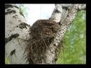 Притча Грязное гнездо читает Павел Беседин