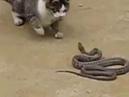Ну реакция Кошка реально замочила змею