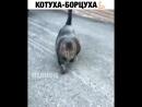 Котуха -жируха😂