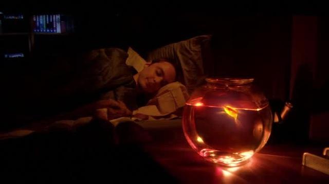 Спит усталый Шелдон. По версии Кураж-Бамбей.