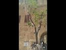 Подвешенное Дерево, Яффо
