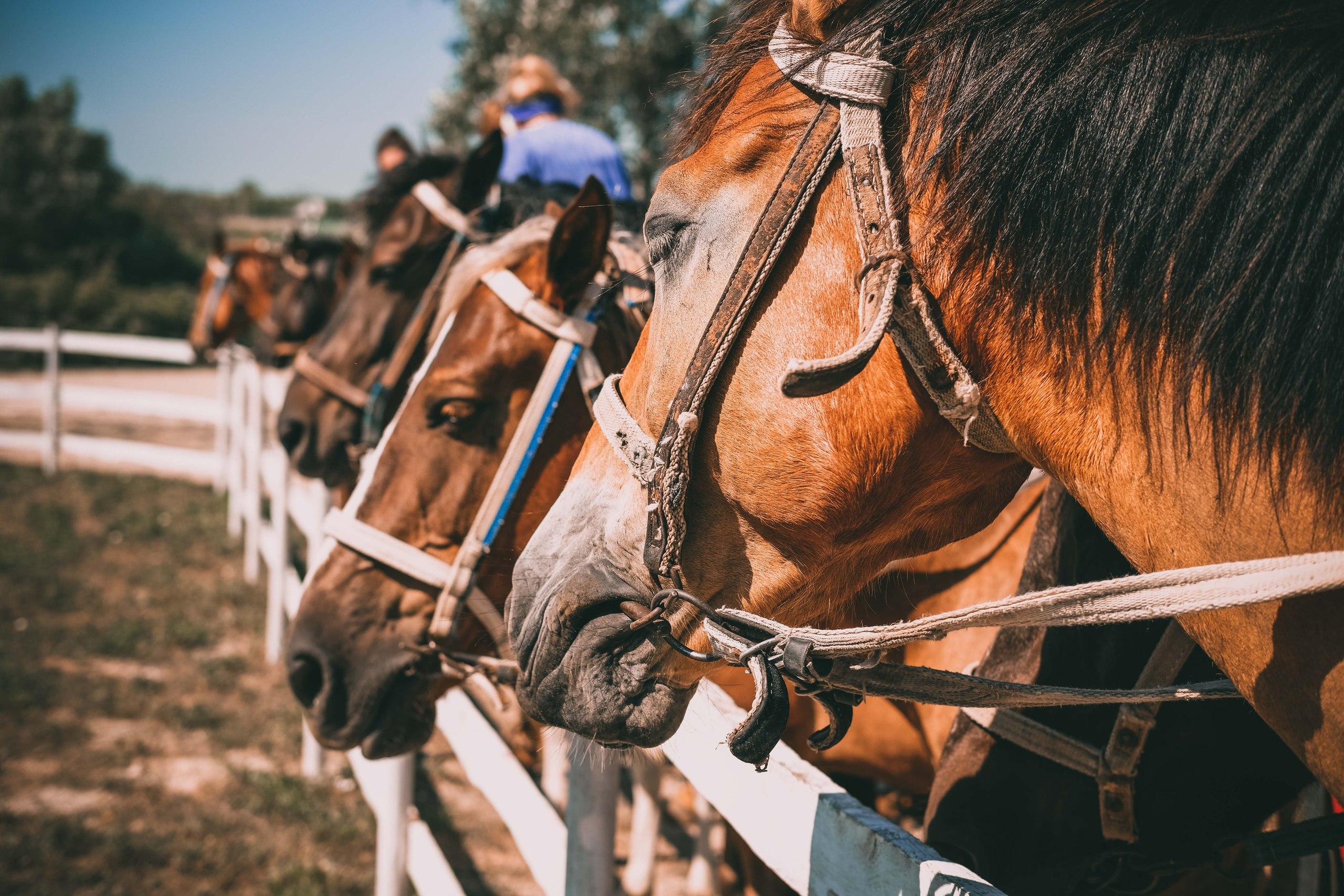 конные прогулка в Крыму, клуб