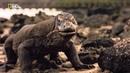 Комодский варан доисторический каннибал