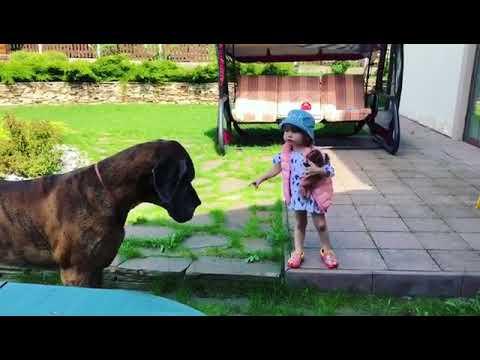 Дочь Екатерины Климовой Бэлла зовет огромного дога Артура гулять