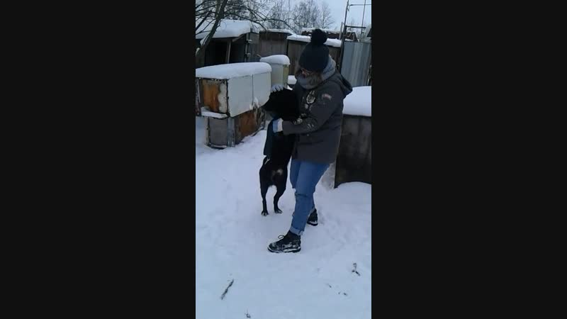 Прогулка с опекунами - Торфяночка и Ласкин мальчик 04.01.2019