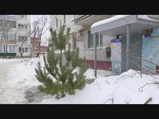 Куда уходят зеленые красавицы после Нового года http://ulpravda.ru