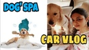 SUMMER SPECIAL Dog's SPA 1 and Car Vlog with my dog Champ How to groom a dog