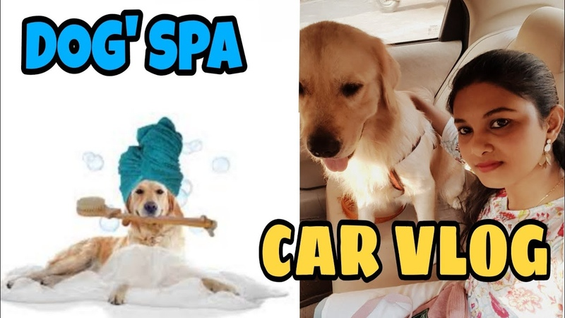(SUMMER SPECIAL)Dog's SPA - 1 and Car Vlog with my dog ChampHow to groom a dog