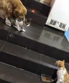 Animals Pets on Instagram Come on Johnny, you keep getting into fights, lets go home.