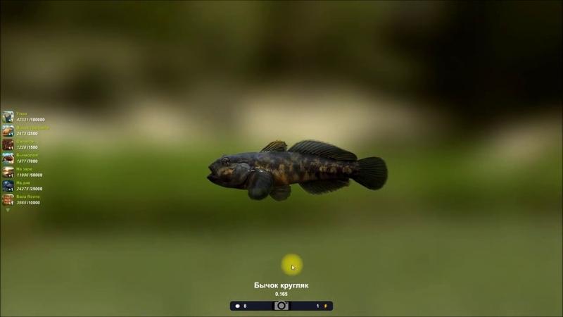 Бычок кругляк прохождение квеста в игре Трофейная рыбалка 2