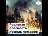 Реальная опасность лесных пожаров ROMB