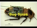 Fly With Sensors? DARPA's Surveillance Insects, Hummingbird, Military Drones Igniting Fires