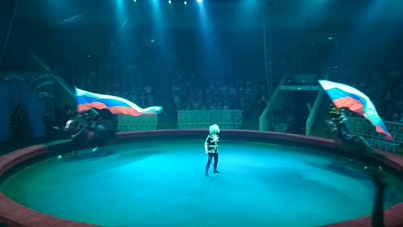 Ахалтекинцы в Омском цирке