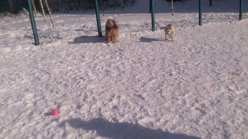 Пёс Тотоша и подружка Бетти за игрой в мячики