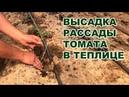 Высадка рассады томата в теплице. Летне-осенний оборот томата (13-07-2018)