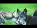 Yuriy Lipskiy – Hound (Bright Version) Official Video Backstage