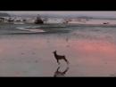 Скачущий олень