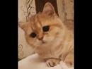 Это же тот самый кот из Шрека 🙀