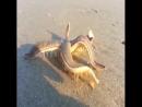 Морская звезда на пляже.