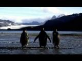 X-Mode - В Мире Животных (Animals).mp4