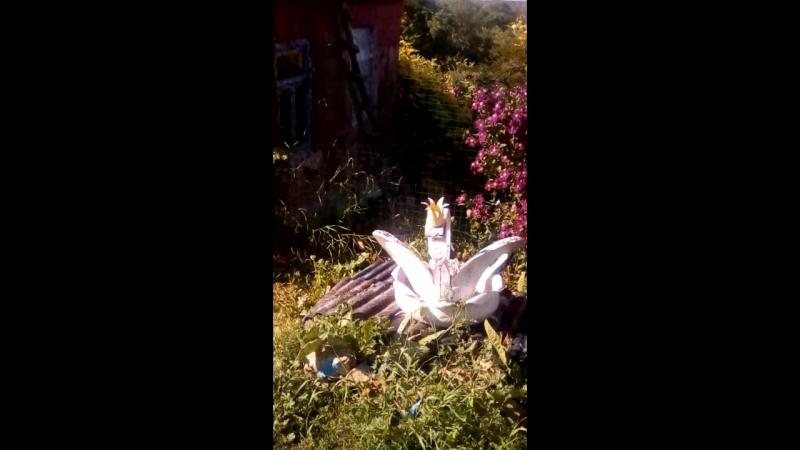 Мой двор Олькины цветы
