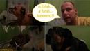 Kutyásélet 3 Miért mozgasd le a kutyádat Ki rágta meg a fotelt és a falat