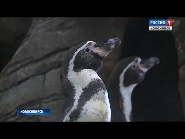 «Вести» узнали, как обитателей новосибирского зоопарка спасают от жары