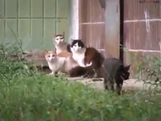 Как крыса котов разгоняла (ВоК)