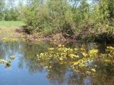 ВИА Акварели Река родная