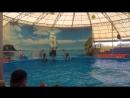 Мой поход в дельфинарий на острове Пхукет