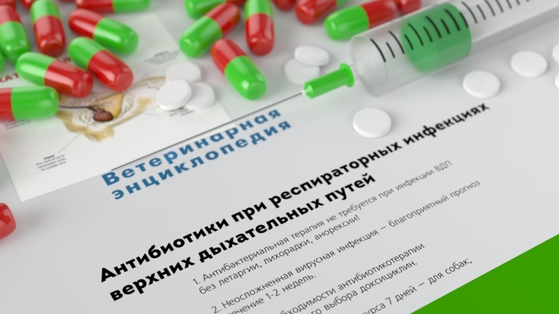 Антибиотики при респираторных инфекциях верхних дыхательных путей