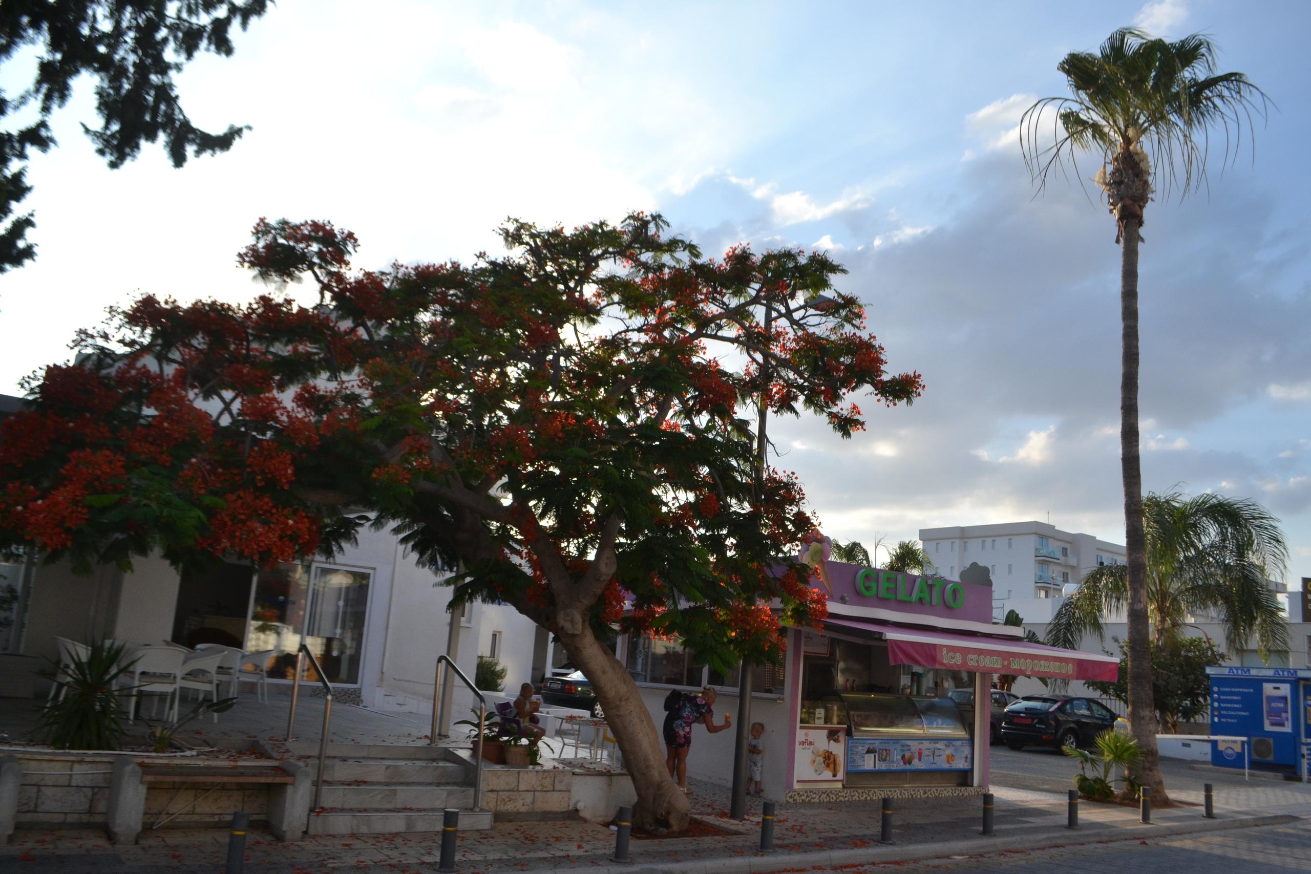 Елена Руденко (Валтея). Кипр. Айия-Напа (фото). - Страница 4 Mtsy3hmjjhM