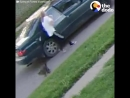 Cat Escapes From Woman Trying to Steal Him - SECURITY FOOTAGE _ The Dodo