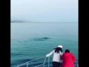 Прогулка с дельфинами