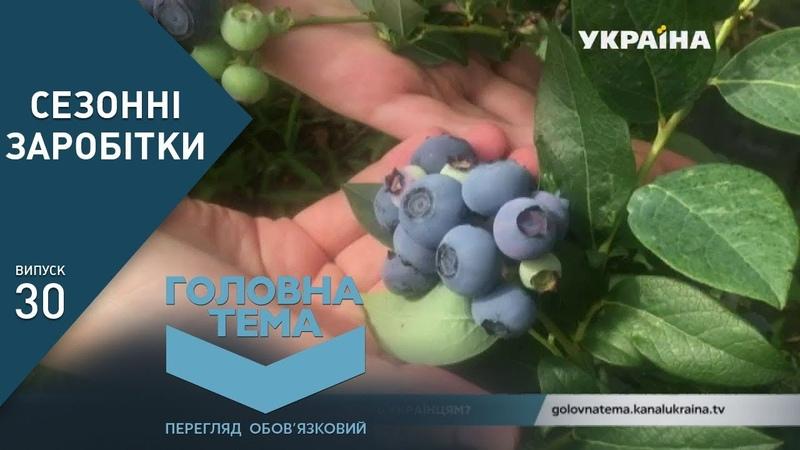 Сезонні заробітки: скільки платять українцям за кордоном (Випуск 30) | Головна тема