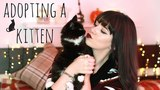 Adopting A New Kitten &amp Introducing It To Our Cat! Melanie Murphy