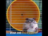 10_PETS2_AtVet_Hamster_Fat_1x1_mix1_17042019_HD