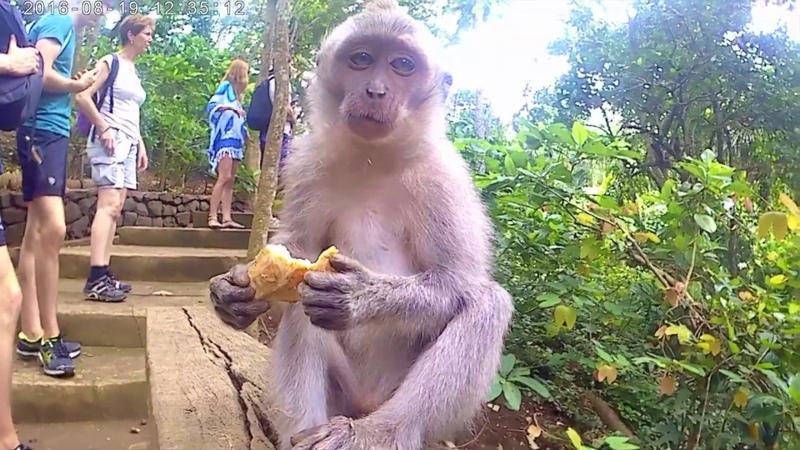 🇮🇩 Indonesia Bali Ubud Monkey Forest Temple Butterfly Park Бали Убуд اوبود بالي إندونيسيا
