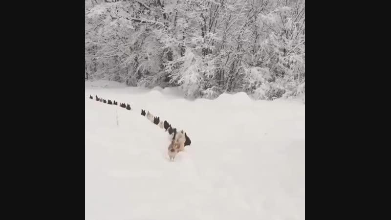 Любимым животным выстроиться в линию.