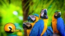 Breathtaking colors of nature macaw birds 🦜🦜 in 4k ultra hd for 4k oled tv uhd tv screensaver