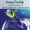 АкваЛайф -jОбслуживание и оформление аквариума
