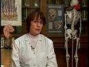 Тело человека. Позвоночник (Columna vertebralis)
