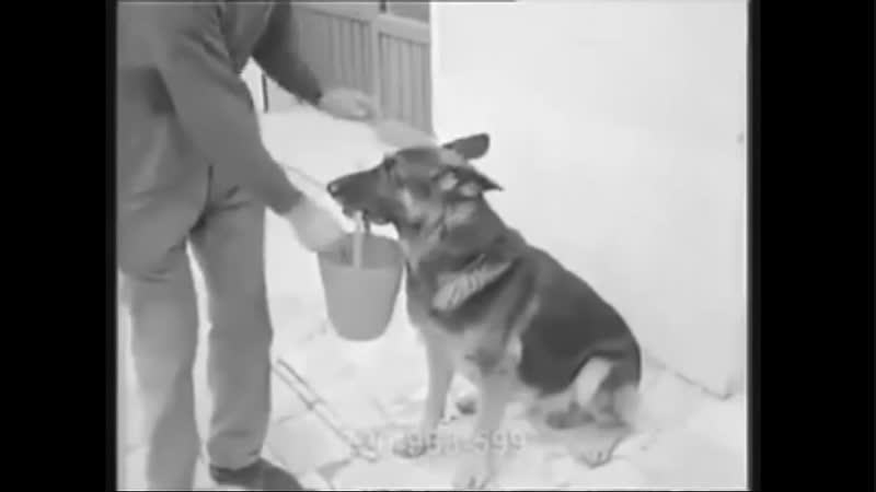 Собака с ведром в зубах просит денег чтоб купить еду
