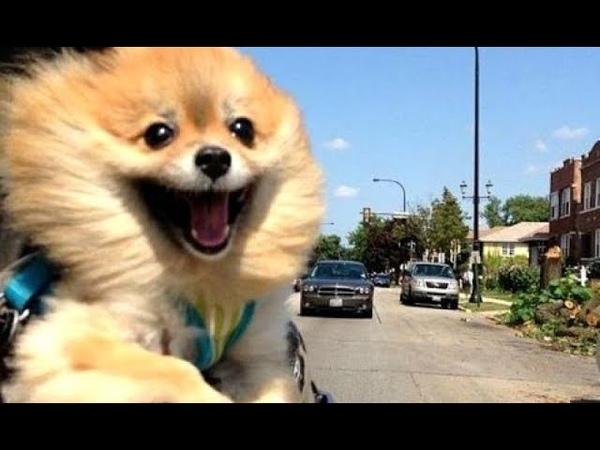 [웃긴동영상]보는순간 심장어택! 너무 귀여운 동물영상!!😂